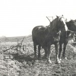 En de boer hij ploegde voort. Jan Verweij met twee paarden voor de ploeg. Foto 126